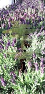 Gartengestaltung Lavendel