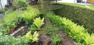 Gartengestaltung vorher